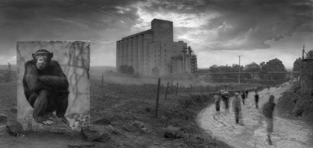 Inherit the Dust, Nick Brandt3