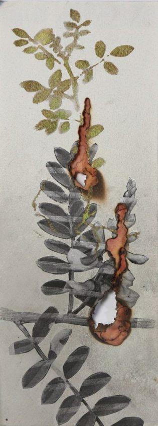 Inumaru-esquis-arc-en-ciel-des-plantes 1