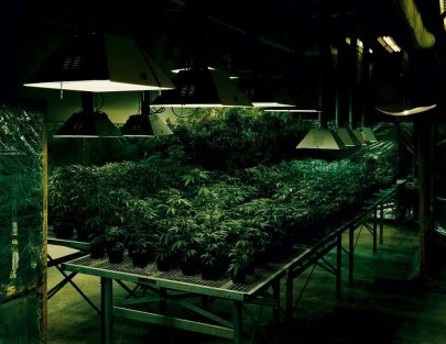 Taryn-Simon-Research-Marijuana-Crop-Grow-Room-National-Center-for-Natural-Products-Research-Oxford-Mississipi