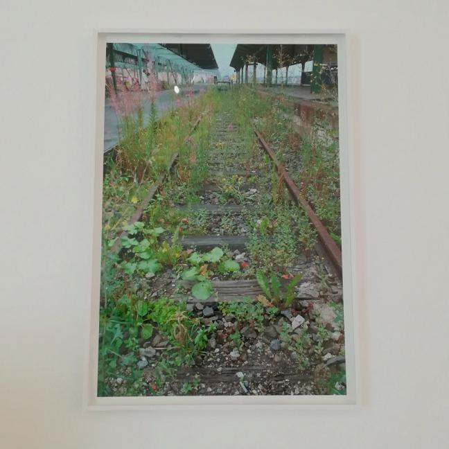 Lois-Weinberger_ce-qui-est-au-dela-des-plantes-en-fait-partie-documenta-X